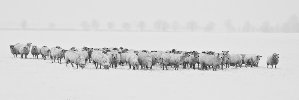 winter-1142029_960_720